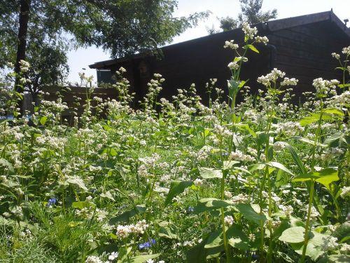 bee-deals-blijmetdebijen-insectenhotel
