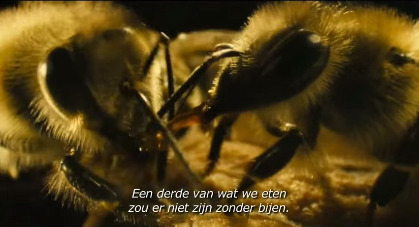 zonder_bijen